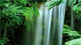 waterfall_jungle