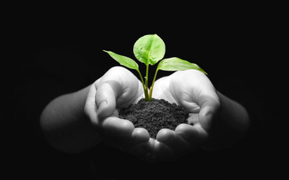 seedling_in_hands_410